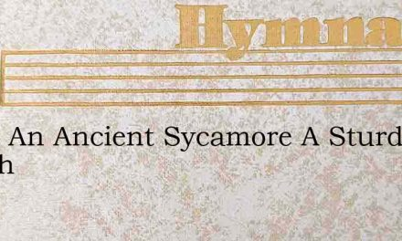 Upon An Ancient Sycamore A Sturdy Bough – Hymn Lyrics